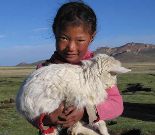 young girl and sheep